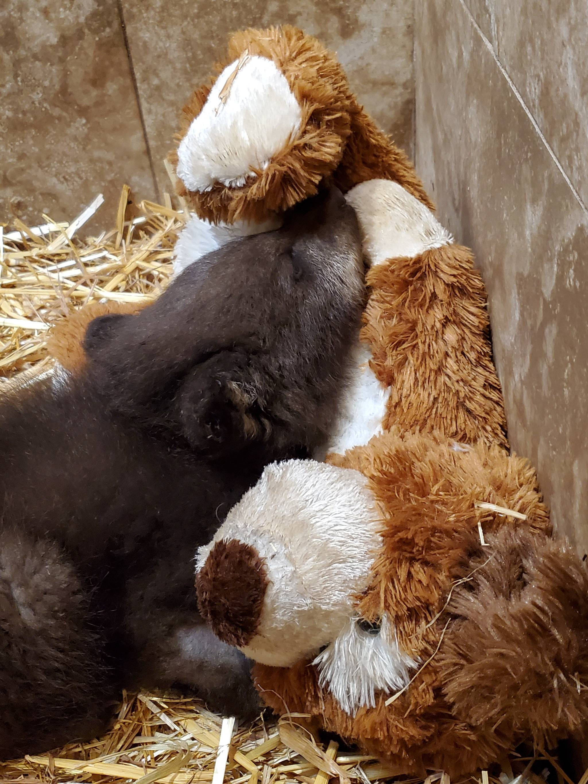Bear cub on the mend. (Contributed photo)